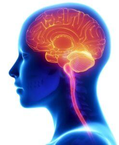 Amazing Biology Facts You Must Know About 1 - Brain