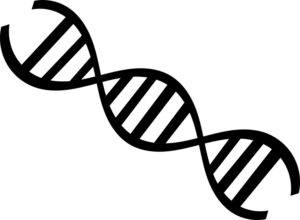 Amazing Biology Facts You Must Know About 4 - DNA