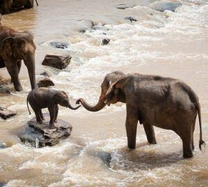 Amazing Biology Facts You Must Know About 5 - Baby Elephant
