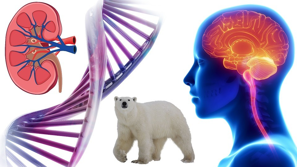Amazing Biology Facts You Must Know About.