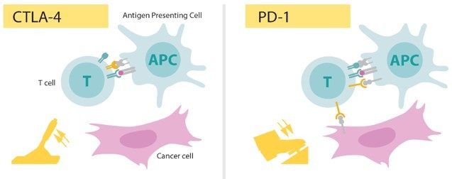 Cancer immunotherapy for human welfare 5