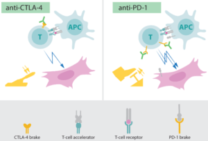 Cancer immunotherapy for human welfare 6