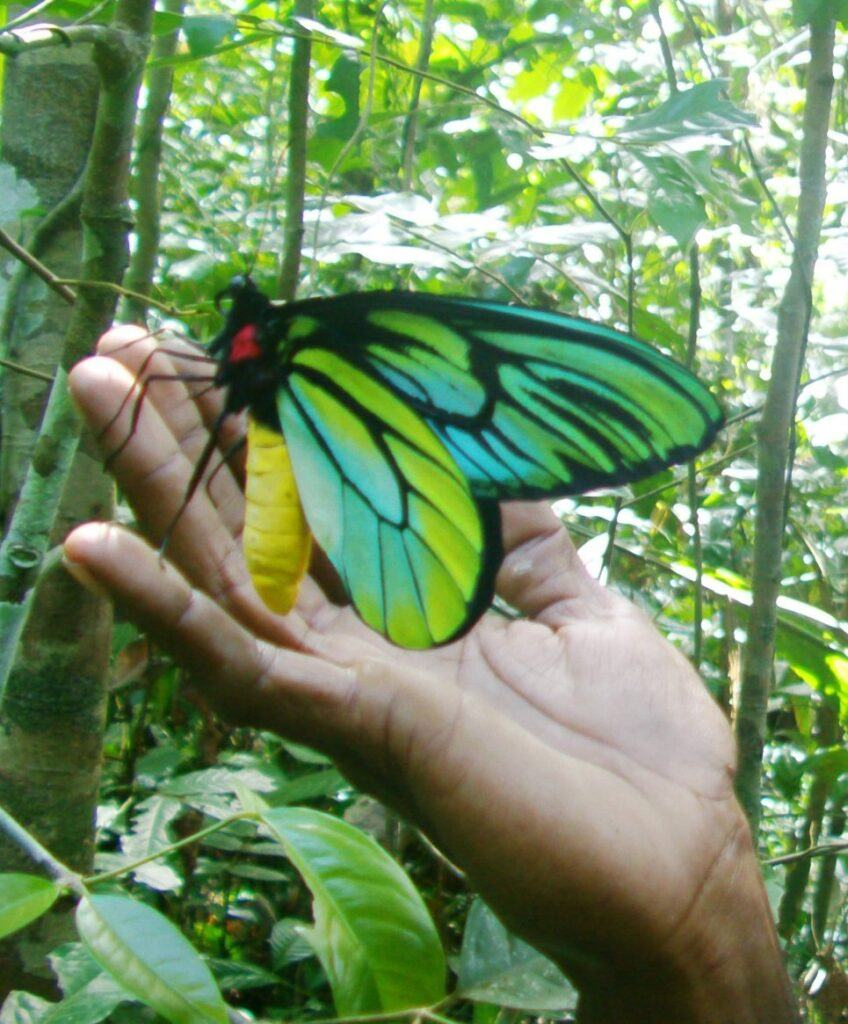 Largest and Smallest - largest butterfly
