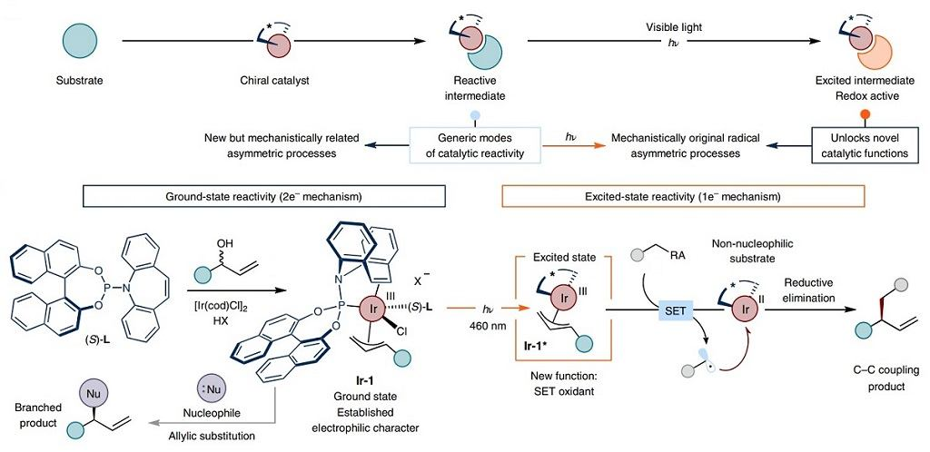 Best Discoveries in Cross coupling & C-H activation fields (May-June 2021)-2a