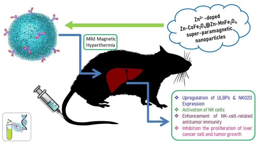 New Nanomaterial Inhibits Liver Cancer via Mild Magnetic Hyperthermia Therapy (MHT)