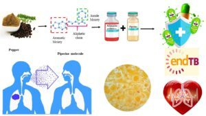 Piperine - A spice molecule that serves as a highly effective bioenhancer for TB-antibiotics..